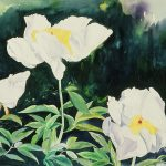 marys-white-lilies